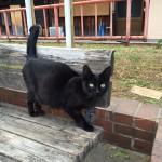 公園にいた黒猫